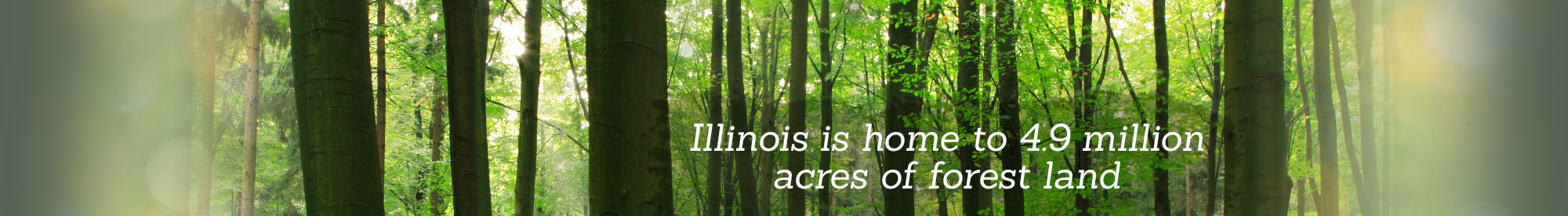 Illinois is home to 4.9 million acres of forest land.