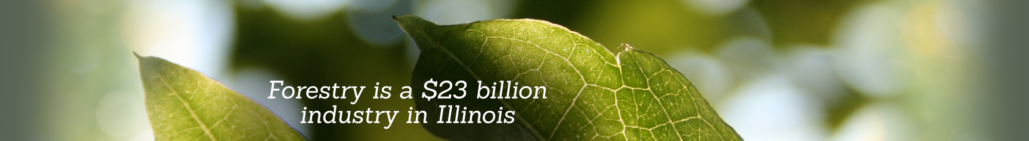 Forestry is a $23 billion industry in Illinois