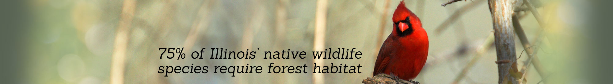 75% of Illinois' native wildlife require forest habitat.